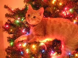 cat christmas cats in christmas trees 42 pics