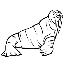 coloring page for walrus walrus coloring page animals town animals color sheet walrus