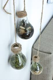 best 25 light bulb terrarium ideas on pinterest light bulb