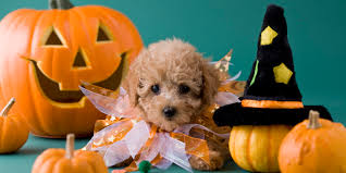 happy halloween funny picture halloween from your dog u0027s perspective huffpost