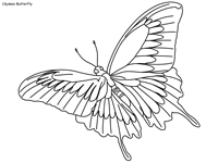 butterfly coloring pages page 2