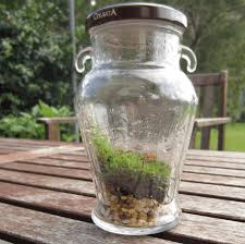 sealed bottle garden how to create a terrarium or vivarium or self contained bottle