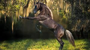 free horse background background photos windows mac