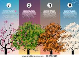 four seasons tree stock images royalty free images u0026 vectors