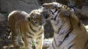 Wild Lights Denver Zoo by Denver Teen Activities Visit Denver