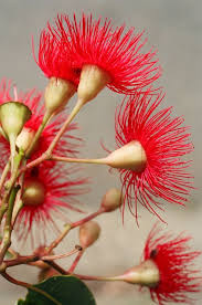 32 best australian flowers greeting cards images on pinterest