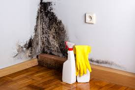 mold removal how to get rid of black mold zillow digs