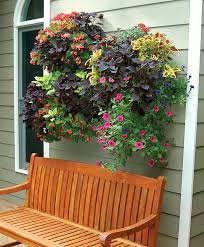 119 best window boxes images on pinterest window boxes windows