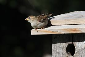 providing places to raise young birds in the yard