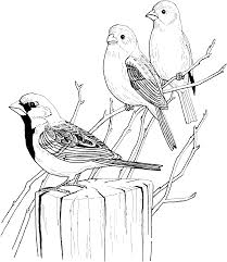 three sparrows on tree coloring page gif 1094 1261 clipart