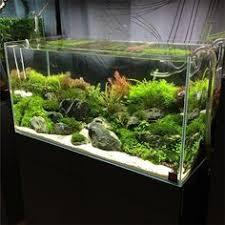 Aquascape Aquarium Designs Aquarium Design Group 90cm Ada Aquascape Aquarium Pinterest