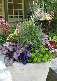 heuchera a small pine and some blue pansies for a fresh spring