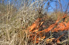 Wildfire Nutrition by Texas Wildfires Map Wildfires In Texas Wildland Fire