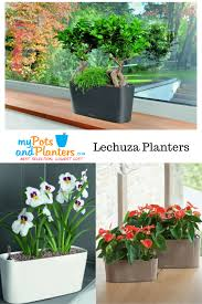 indoor windowsill planter home lechuza large delta windowsill self watering planter planters