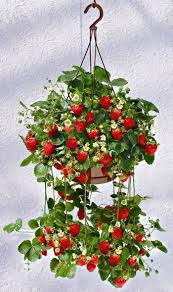 Hanging Plants For Patio Best 25 Hanging Plants Outdoor Ideas On Pinterest Plant Wall
