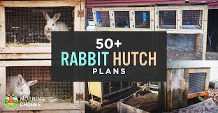 Get In Touch For Hutch 50 Diy Rabbit Hutch Plans To Get You Started Keeping Rabbits
