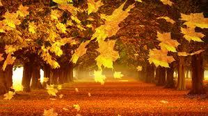 Imagenes Animadas De Otoño | 32 imágenes animadas hojas de otoño 1000 gifs