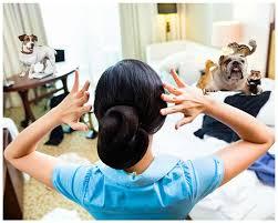 Best Pet Vaccum Best Vacuum For Pet Hair Buying Guide Pet Hair Vacuum Reviews