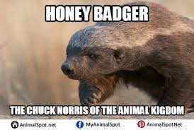Meme Honey Badger - meme honey badger png