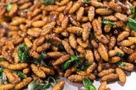 cuisine cocoon fried cocoon silkworm with herb stock photo image of cuisine