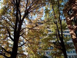 cool trees arbor veritas tree truth cool tree photos trees of kansas city