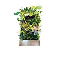 plants on walls florafelt vertical garden living wall systems