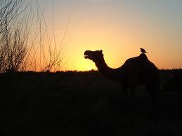 thar desert location file thar desert nr jaisalmer rajasthan india 15823580219