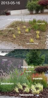 247 best landscaping plants images on landscaping