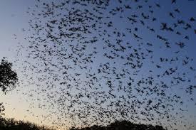 bats free images public domain images