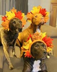 happy thanksgiving from all of us at national mill rescue