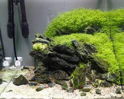 Aquascape Freshwater Aquarium Planted Tank On The Edge By Piotr Kwiatkowski Aquarium Design