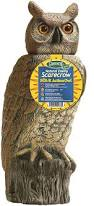 how to keep birds away from patio amazon com gardeneer by dalen natural enemy scarecrow sol r