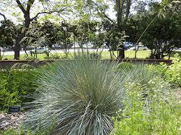 deer resistant plants your garden sanctuary