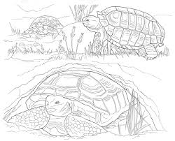beautiful desert coloring pages 98 in line drawings with desert