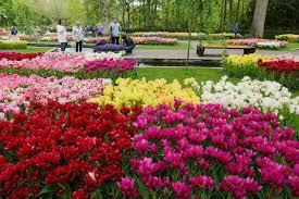 mini cruise to keukenhof gardens amsterdam mini cruise dfds