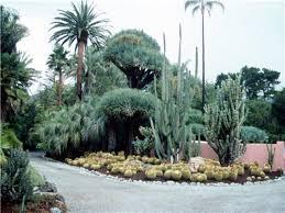 images of cactus garden ideas garden and kitchen