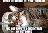 So Much Cocaine Meme - coolest cocaine cat meme cocaine so much cocaine koala quickmeme