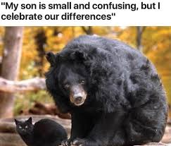 Funny Bear Memes - best of 155 best funny as hell e cards memes images on pinterest