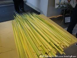 palms for palm sunday where palm sunday palms come from