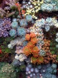 87 best succulents and sempervivens images on pinterest