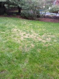 gardening cheat sheets lawn top best green ideas on pinterest