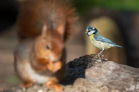 top 5 best squirrel proof bird feeders for sale in 2017 animallama