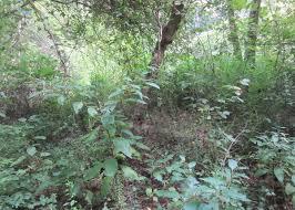 native georgia plants forest restoration trees atlanta