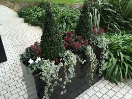 Plants For Winter Window Boxes - conical buxus skimmia japonica white cyclamen and ivy my must