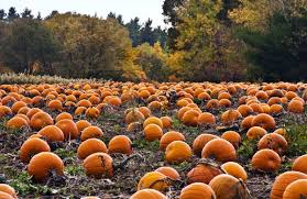 Half Moon Bay Pumpkin Festival by The Bay Area U0027s 7 Best Pumpkin Patches 49 Miles