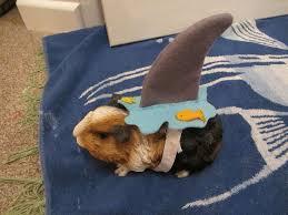 Dog Costume Halloween 134 Halloween Pet Costumes Images Animal
