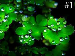 Irish Halloween Poems 1 Irish Jpg W U003d1500 U0026h U003d1126