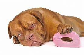 boxer dog upset stomach what are the benefits of yogurt for dogs and puppies