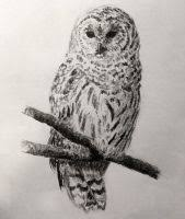owl sketch by normanrawnart on deviantart