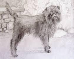 affenpinscher coat type affenpinscher small dog breed breeds of small dogs best small